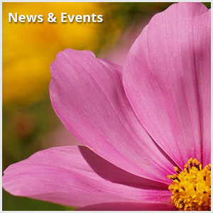 News&Events QuickLink